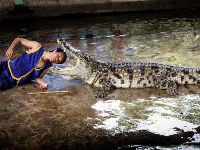 crocodile-1543063